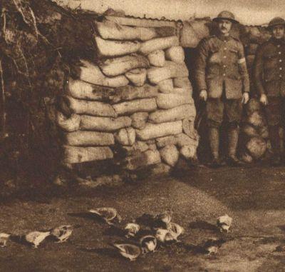 الحرب ال - الحرب العالميه الاولى Normal_01051