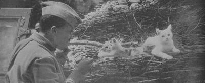 الحرب ال - الحرب العالميه الاولى Normal_01055